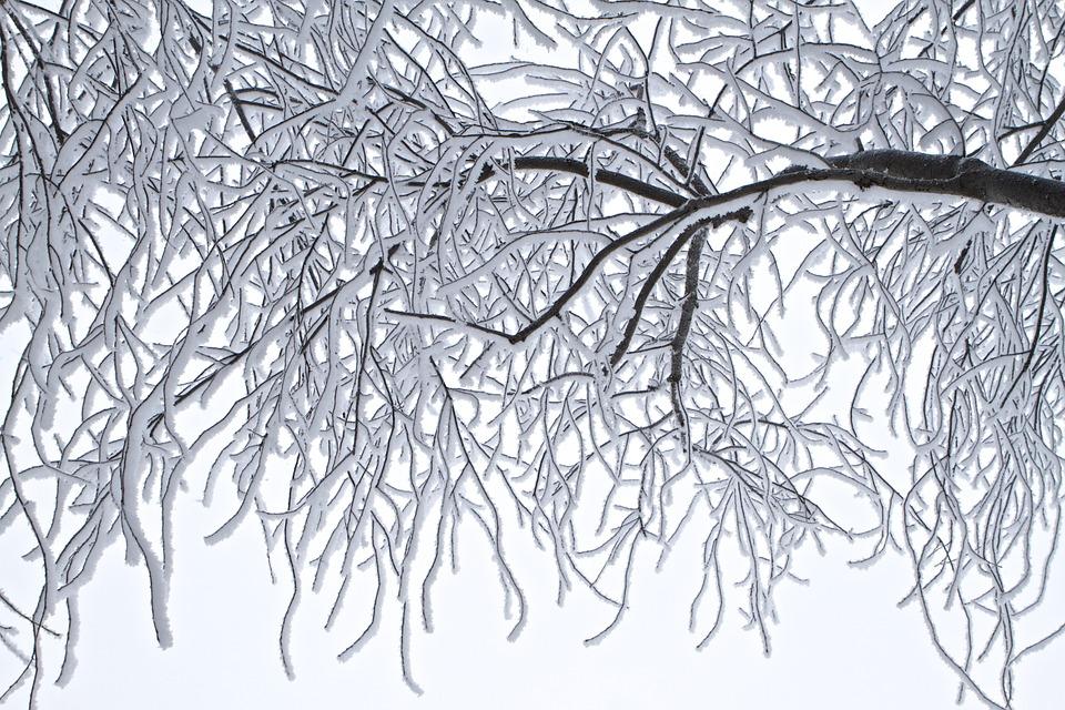 trees-772550_960_720